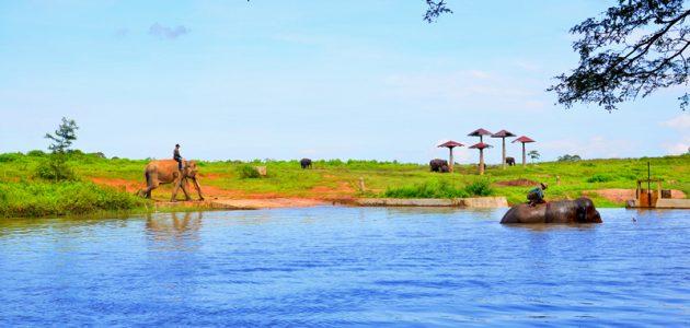 Pusat Latihan Gajah-PLG
